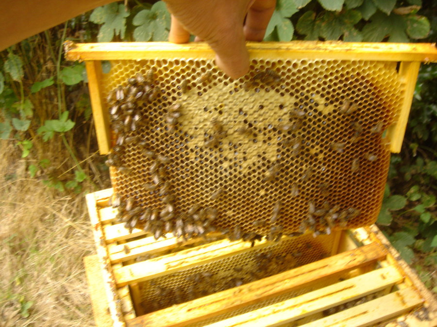 des abeilles et du miel. Black Bedroom Furniture Sets. Home Design Ideas